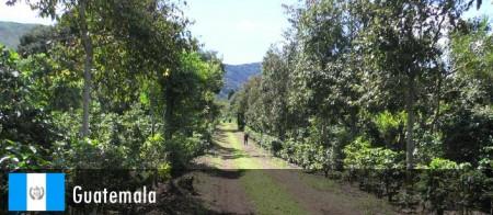フロレンシア農園